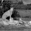 Shingo and her six cubs by the Talek River in Masai Mara