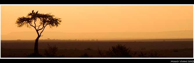 Evening in the Mara