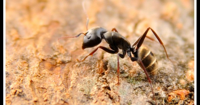 An ant soldiers on his quest to search for food