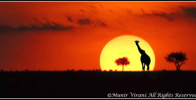 Only in Kenya can the tranquility of a glorious dusk be appreciated