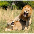 Honey, I told you I have a headache!