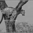 The son of Olive in the Masai Mara